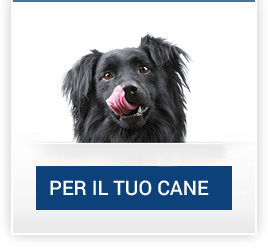 catalogo_cane