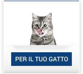 catalogo_gatto