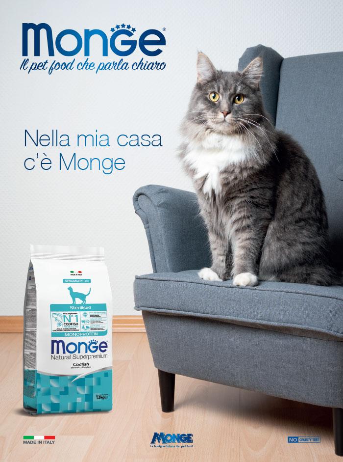 Monge-Gatto-2021-Casa